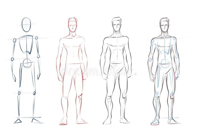 Vector Male Human Body Drawing Sketches Stock Vector Illustration Of Learning Position 195498592 Sketchy single line drawing a sensual man vector. dreamstime com