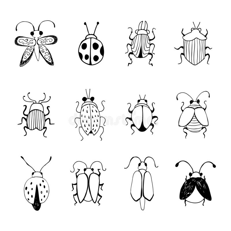 Hand drawn Insect Sketch. Design for handmade decorative brooch. Can be used for postcard t-shirt bag poster. Insect collection vector illustration