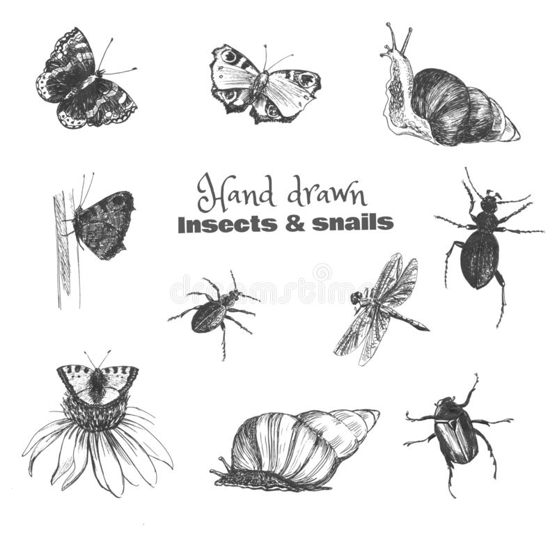 Hand drawn insects. Black-white sketch set of butterflies and beetles, isolated on white stock illustration