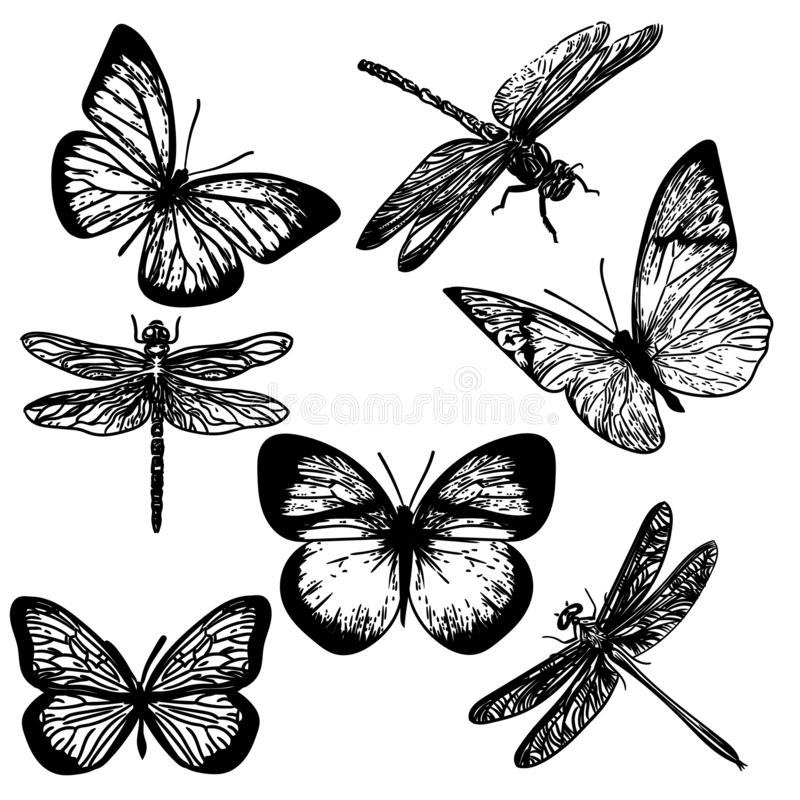 Hand drawn of insects. Vector hand drawn engraving of insects.Butterflies and dragonflies royalty free illustration