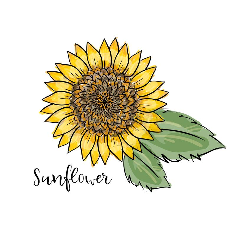 Hand drawn isolated illustration. Colorful summer sketch, watercolor style. Bright and blurred sunflower with leaves. inscription royalty free illustration