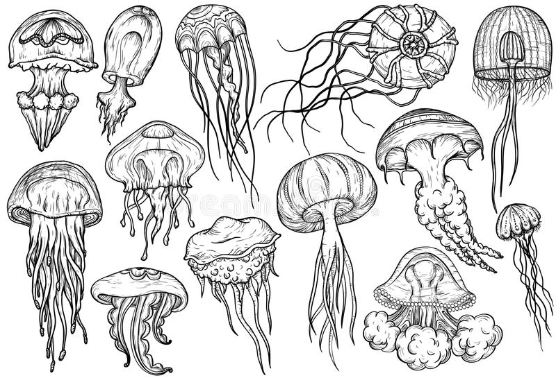 Hand drawn jellyfish set. Sea collection. stock illustration