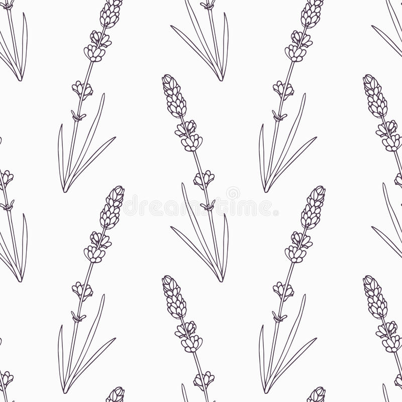 Hand drawn lavender branch and flowers outline vector illustration