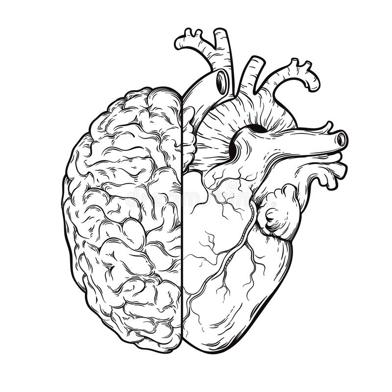 Hand drawn line art human brain and heart halfs - Logic and emotion priority concept. Print or tattoo design isolated on white bac stock illustration