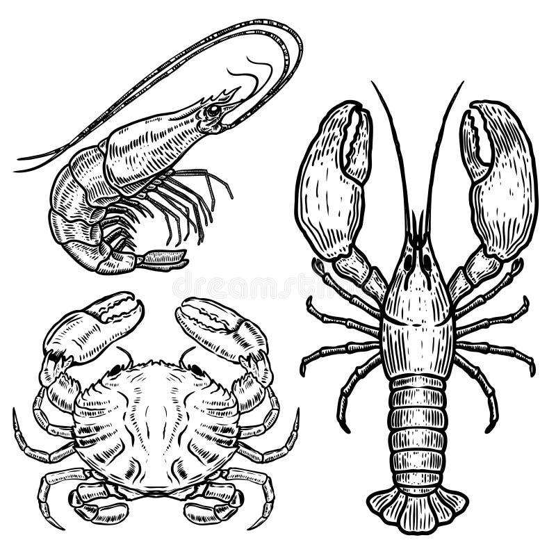 Hand drawn lobster, crab, shrimp illustrations on white background. Seafood. Design elements for poster, emblem, sign, badge, menu stock illustration