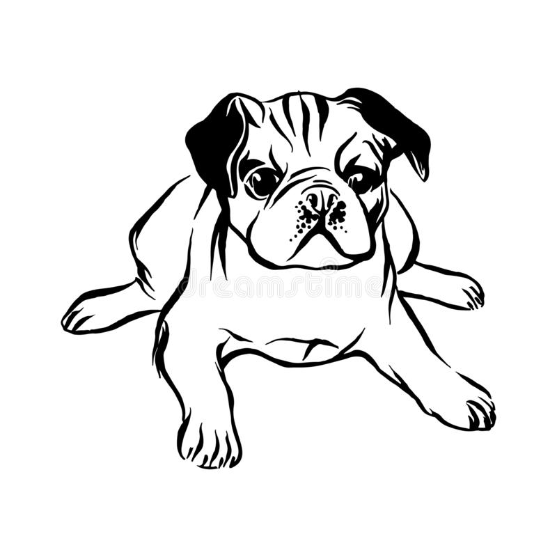 Hand drawn lying pug puppy dog. Vector sketch black isolated animal pet illustration on white background vector illustration