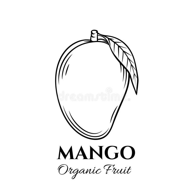 Hand drawn mango icon. Vector badge fruit in the old ink style for brochures, banner, restaurant menu and market vector illustration