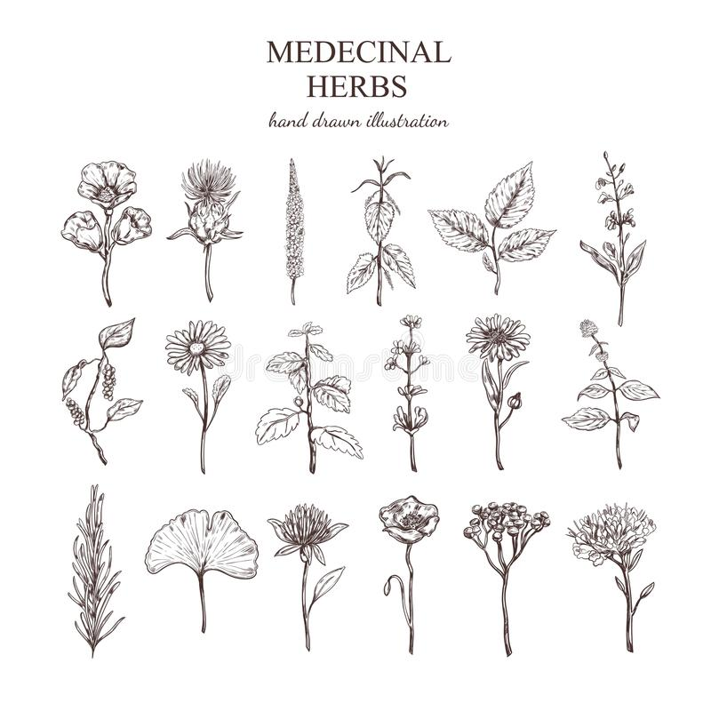 Hand Drawn Medical Herbs Collection royalty free illustration