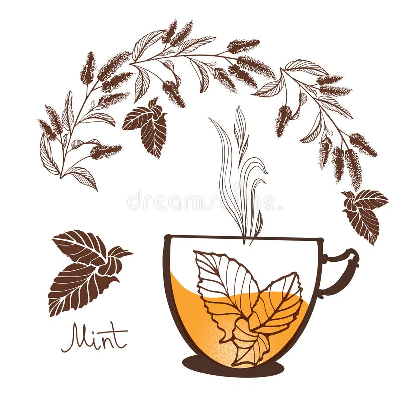 Hand drawn mintn flowers vector illustration royalty free stock image