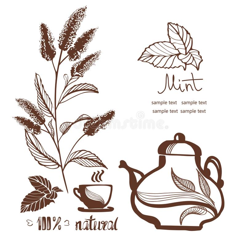 Hand drawn mint  flowers vector illustration stock images