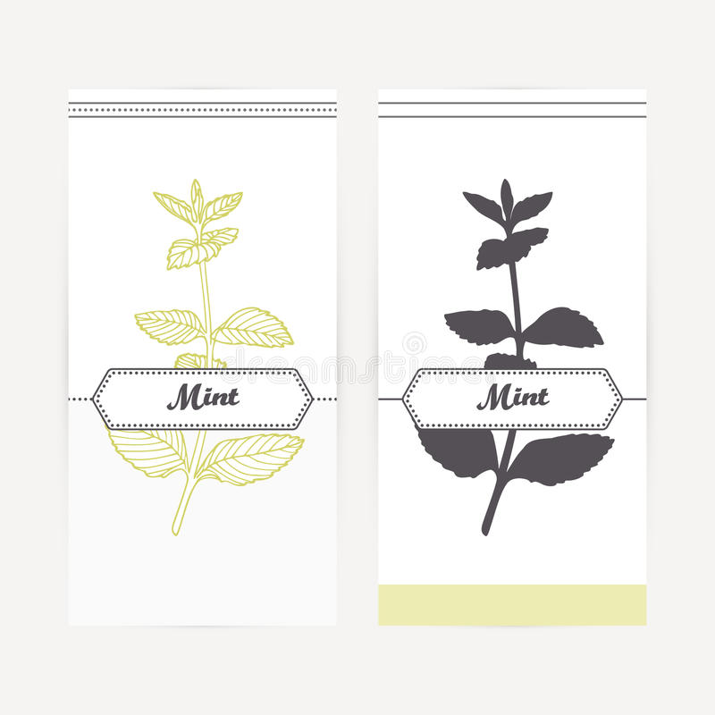 Hand drawn mint in outline and silhouette style. Spicy herbs stock illustration