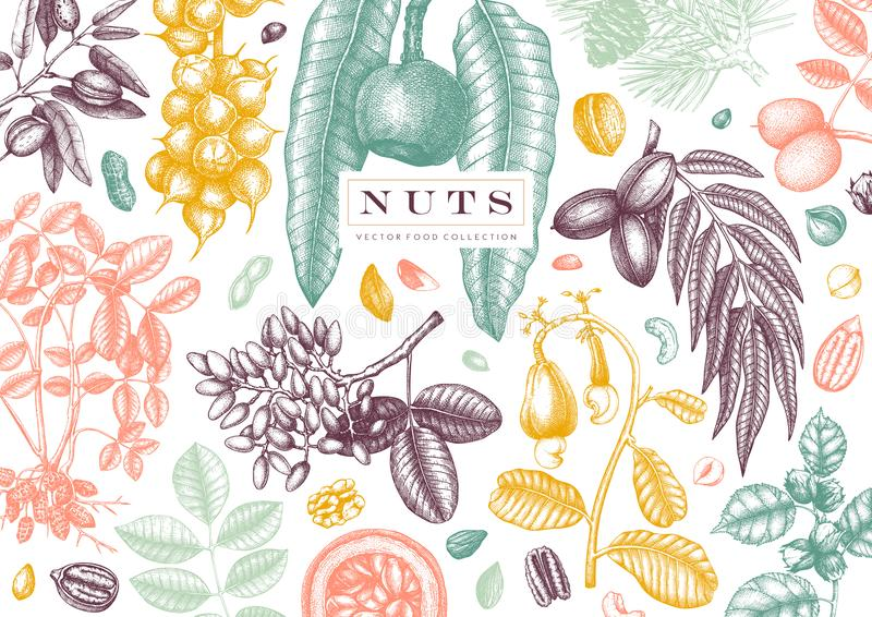 Hand drawn nut design. With vector pecan, macadamia, hazelnut,walnut, almond, pistachio, chestnut, peanut, brazil nut, hazelnut, royalty free illustration