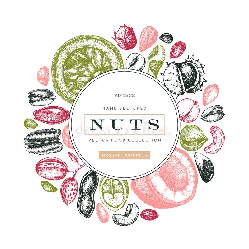 Hand drawn nut trees and plants background. With vector pecan, macadamia, hazelnut,walnut, almond, pistachio, chestnut, peanut,. Brazil nut, hazelnut, coconut stock illustration
