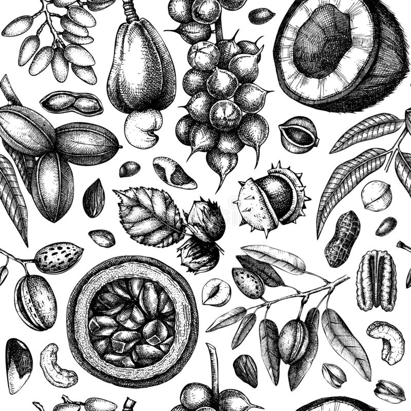 Hand drawn nut trees and plants background. With vector pecan, macadamia, hazelnut,walnut, almond, pistachio, chestnut, peanut,. Brazil nut, hazelnut, coconut royalty free illustration