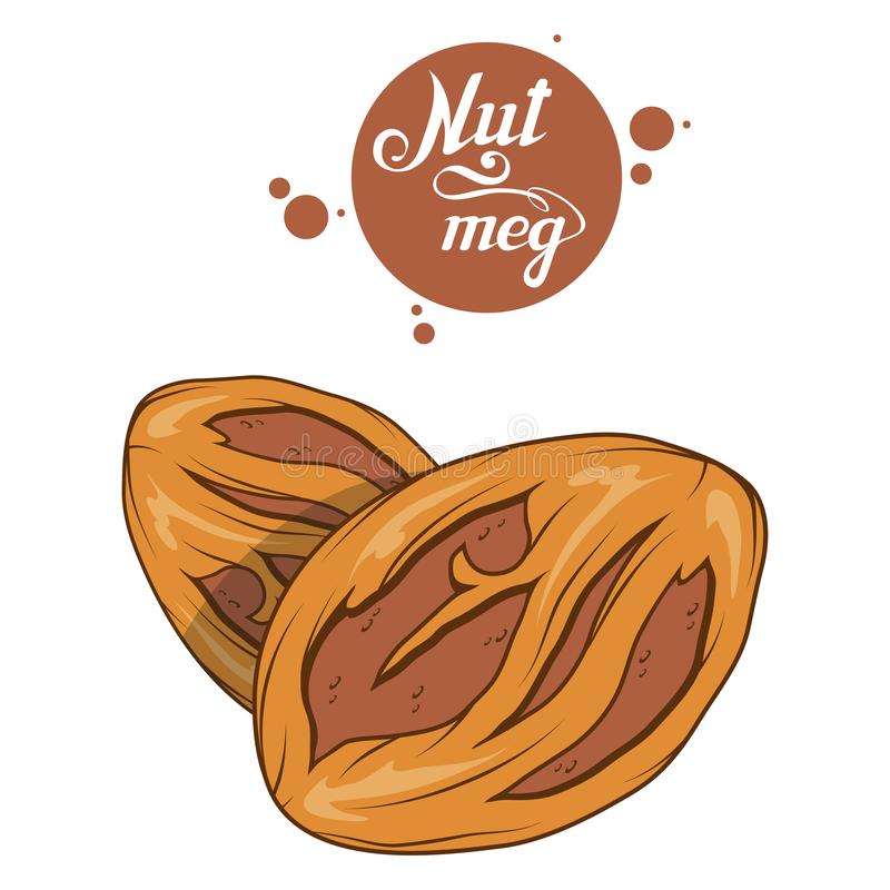 Hand drawn nutmeg powder, spicy ingredient, nutmeg logo, healthy organic food, spice nutmeg isolated on white background, culinary royalty free illustration