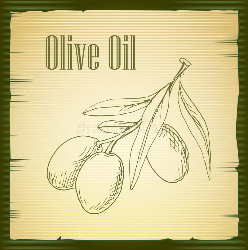 Hand drawn olive branch - vector vector illustration