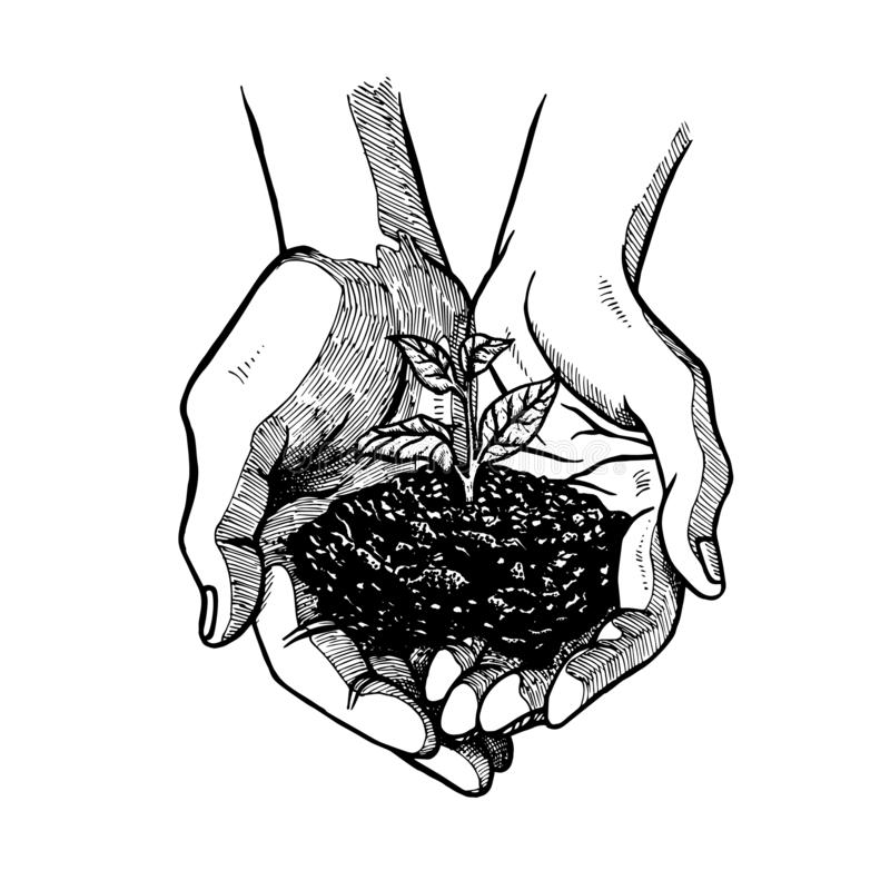 Free Hand Drawn Open Palms With Sprout. Black And White Vintage Hands. Vector Sketch Stock Photography - 138979482