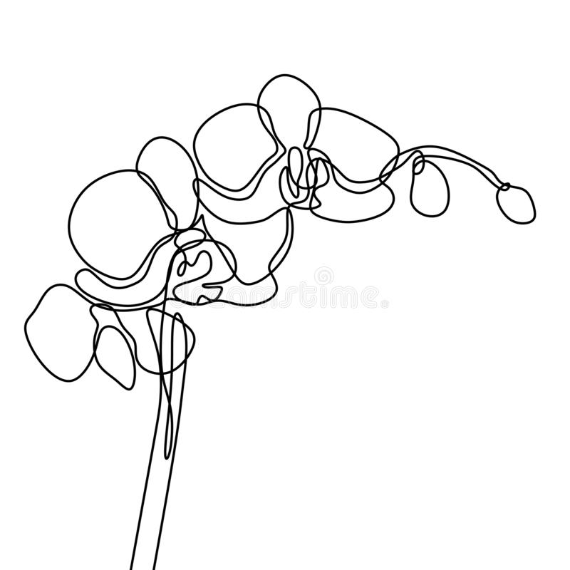 Hand drawn orchid flower. One line drawing continuous illustration vector. Minimalist art design of minimalism on white background. Nature, decoration, logo royalty free illustration