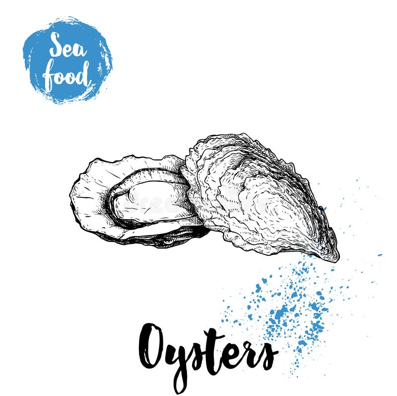 Hand drawn oysters composition. Seafood sketch style illustration. Fresh marine mollusks in closed and opened shells. royalty free illustration
