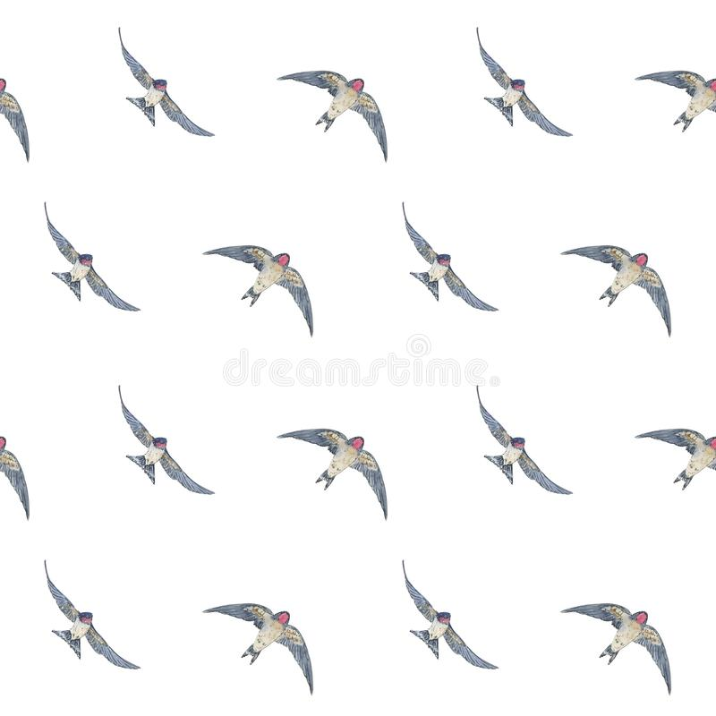 Hand drawn painted seamless pattern of watercolor sketch of isolated birds swallow on white background stock illustration