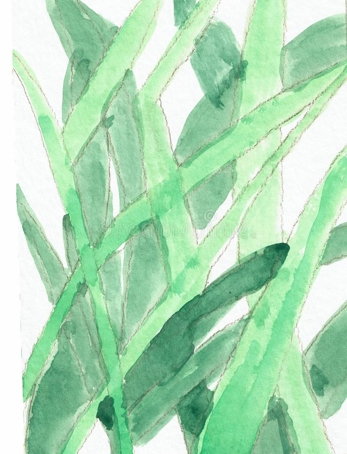 Grasses - Watercolor Drawing stock illustration