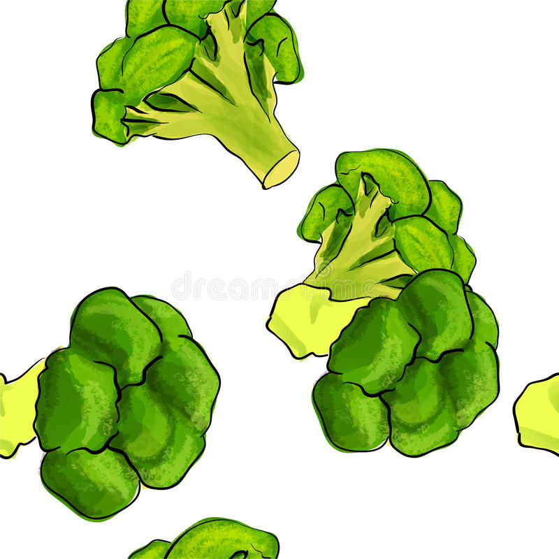 Hand drawn pattern of broccoli isolated on white background. Vector illustration. vector illustration