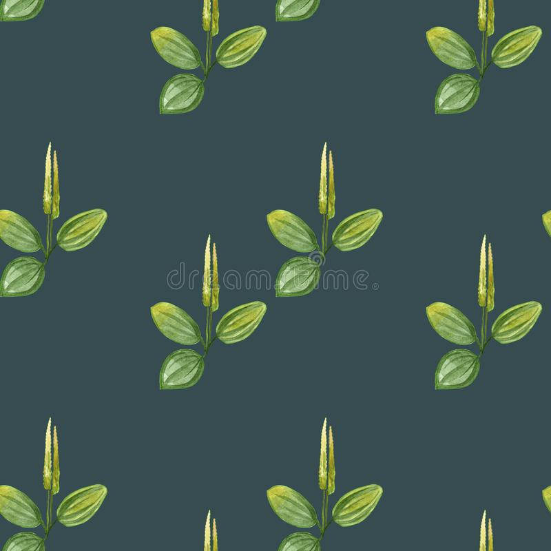Hand drawn pattern seamless watercolor drawing of plantain with yellow flowers and green leaves isolated on green background. vector illustration