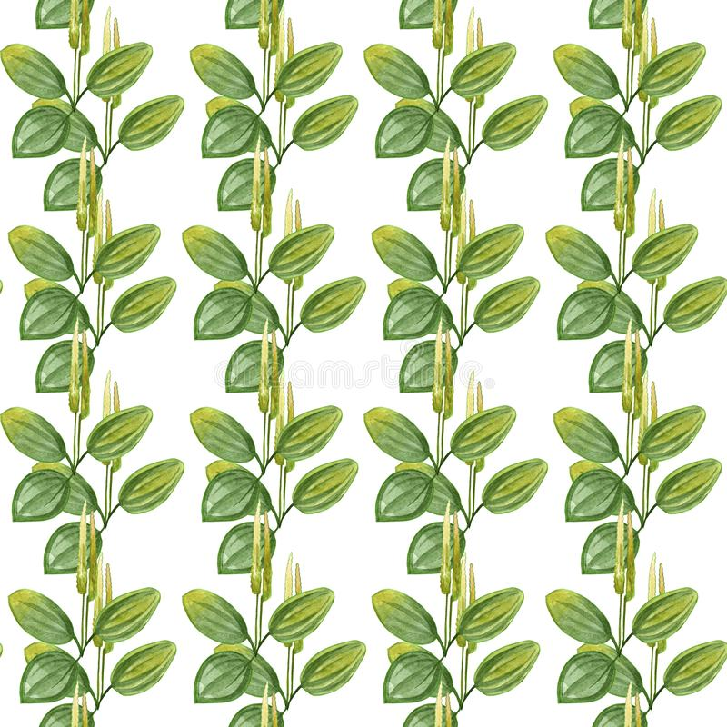 Hand drawn pattern seamless watercolor drawing of plantain with yellow flowers and green leaves isolated on white backdrop. vector illustration