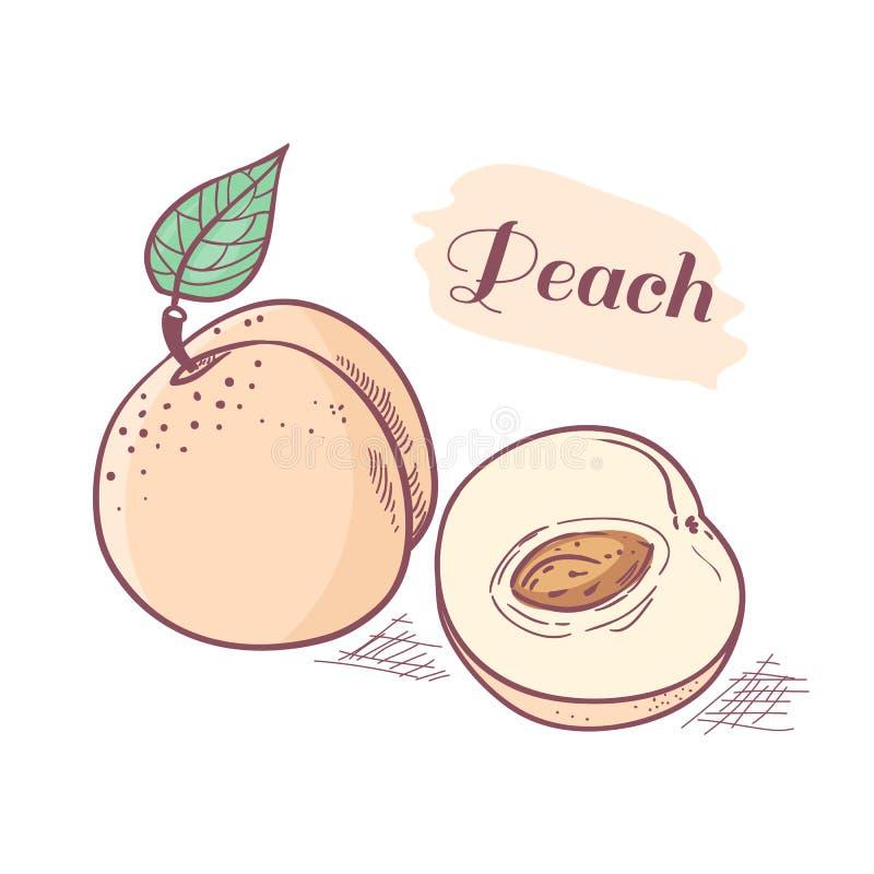Hand drawn peach with slice. Vector illustration stock illustration