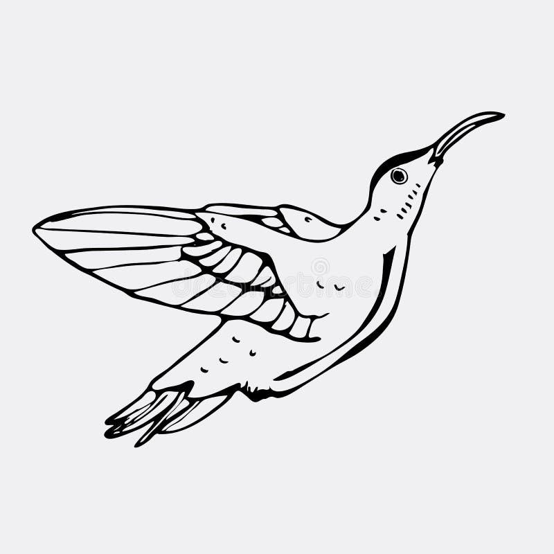 Hand-drawn pencil graphics, colibri bird. Engraving, stencil sty. Hand-drawn pencil graphics colibri bird. Engraving, stencil style. Black and white logo sign vector illustration