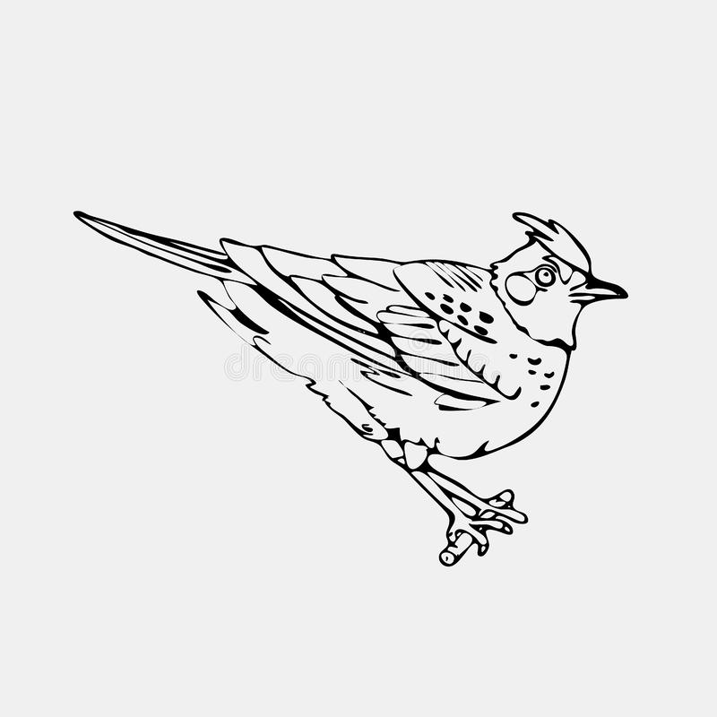 Hand-drawn pencil graphics, lark, oriole, chickadee, sparrow, bl. Ackbird, nightingale, finch, bunting, hangbird. Engraving, stencil style. Black and white logo vector illustration