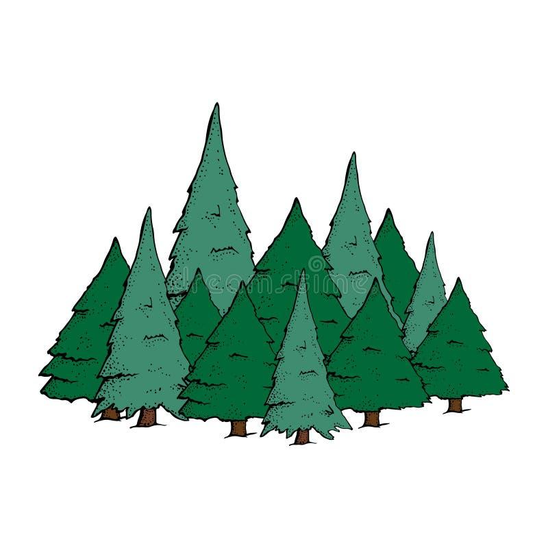 Big W White Christmas Tree: Spruce Tree Isolated On White Background Stock