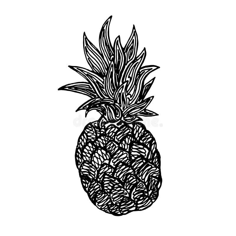 Pineapple pencil sketch stock illustration