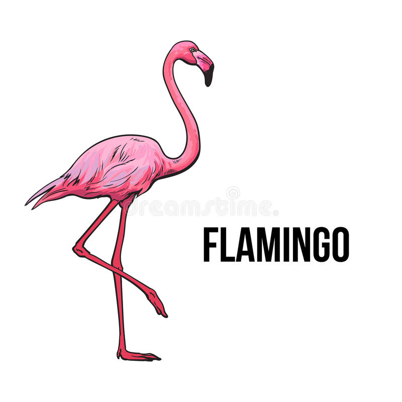 Hand drawn pink flamingo, colorful sketch style vector illustration vector illustration