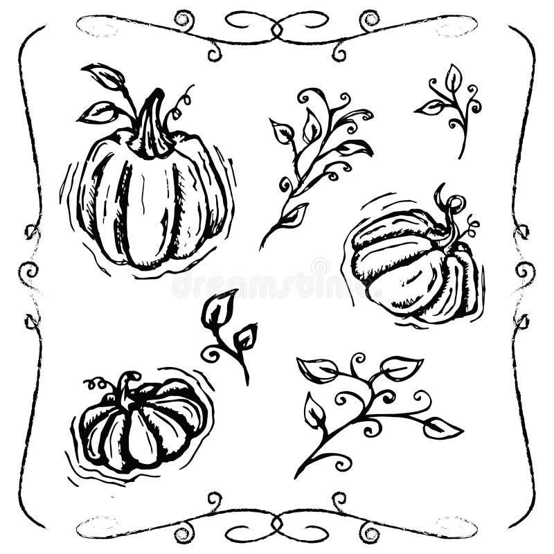 Hand-drawn pompoenen en wijnstokken royalty-vrije stock fotografie