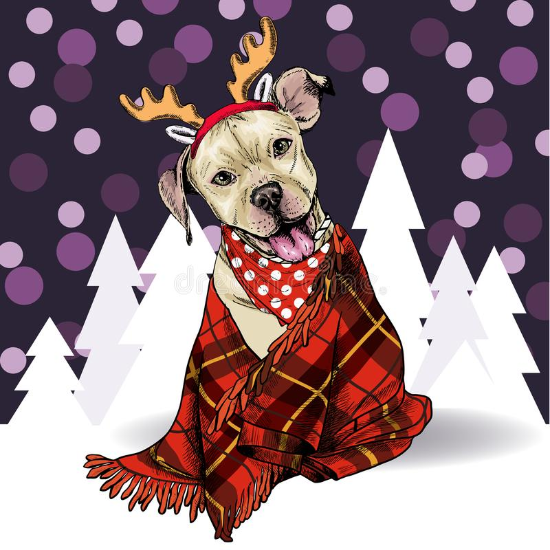 Hand drawn portrait of pit bull teriier dog wearing deer horn hat and plaid blanket. Vector Christmas poster. Xmas royalty free illustration