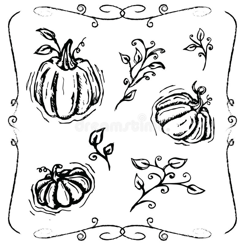 Hand-drawn pumpkins and vines. Hand-drawn grungy pumpkins, vines and leaves with swirly ornaments royalty free illustration