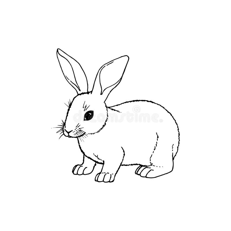 Hand drawn rabbit. Vector black white sketch. Hand drawn rabbit. Retro realistic animal isolated. Line graphic figure. Black and white drawing mammal. Vector stock illustration