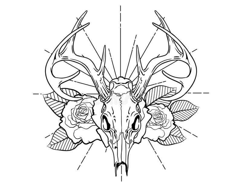 Deer skull tattoo sketch with roses and leafes vintage neo traditional tattoo sketch. Hand drawn retro animal tattoo sketch with roses in vintage style. ornate royalty free illustration