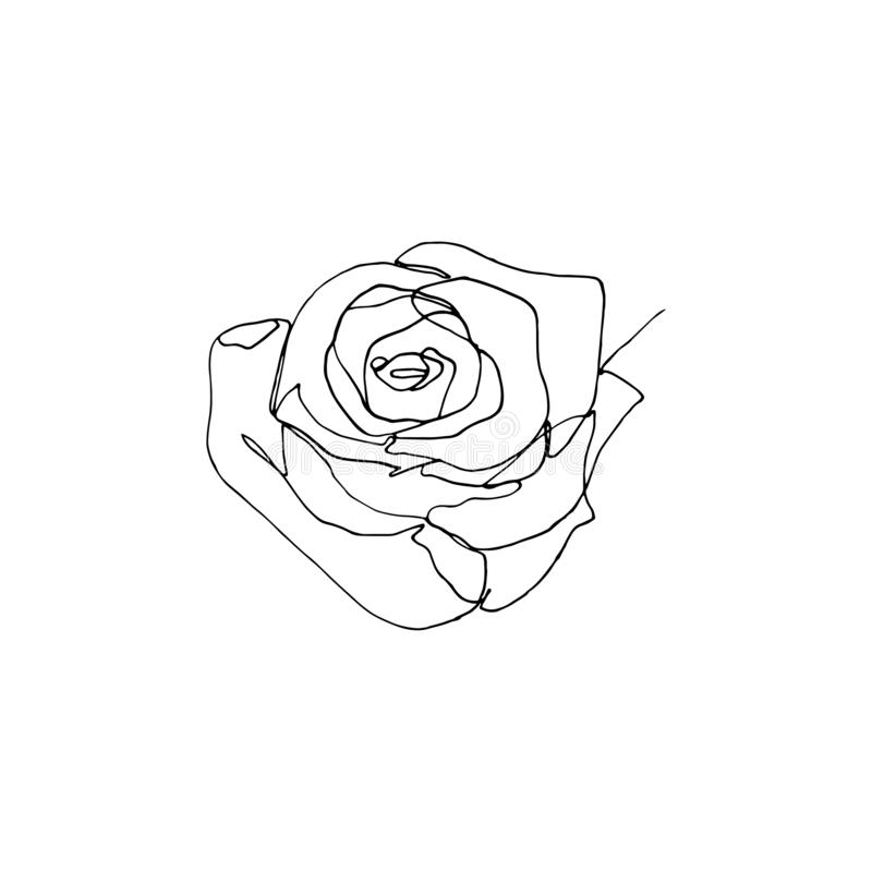 Hand drawn rose flower, one single continuous line drawing. Hand drawn minimalistic rose flower, one single continuous black line simple drawing. isolated on royalty free illustration