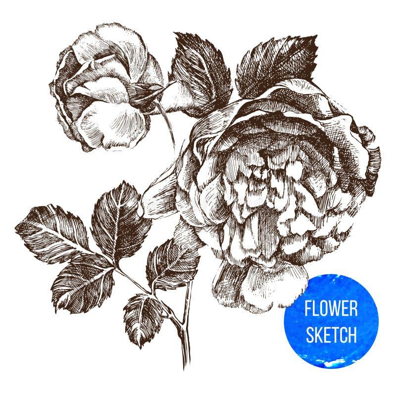 Download Hand drawn rose flower stock vector. Illustration of backgrounds - 43742500