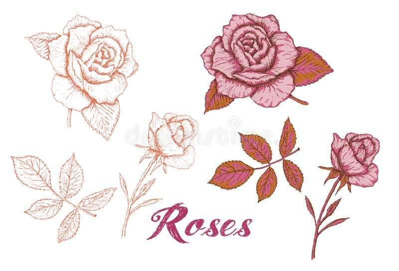 Hand-drawn roses set, vector. Sketch roses silhouette and color roses stock illustration