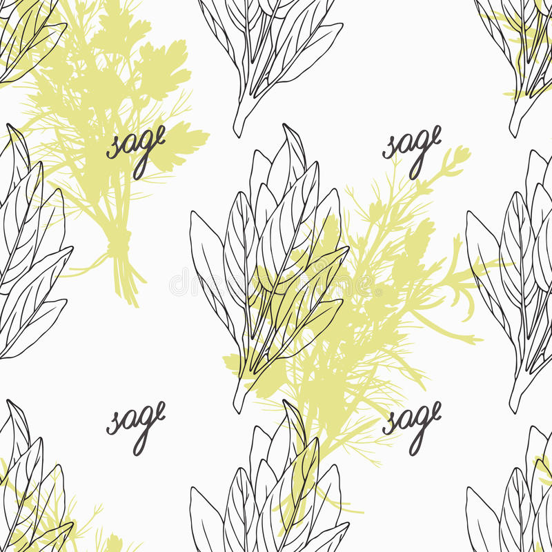 Hand drawn sage branch and handwritten sign. Spicy. Herbs seamless pattern with hand lettering seasoning title. Doodle kitchen background. Vector illustration vector illustration