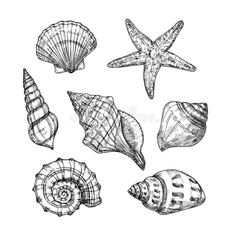 Hand drawn sea shells. Starfish shellfish tropical mollusk in vintage engraving style. Seashell isolated vector royalty free illustration