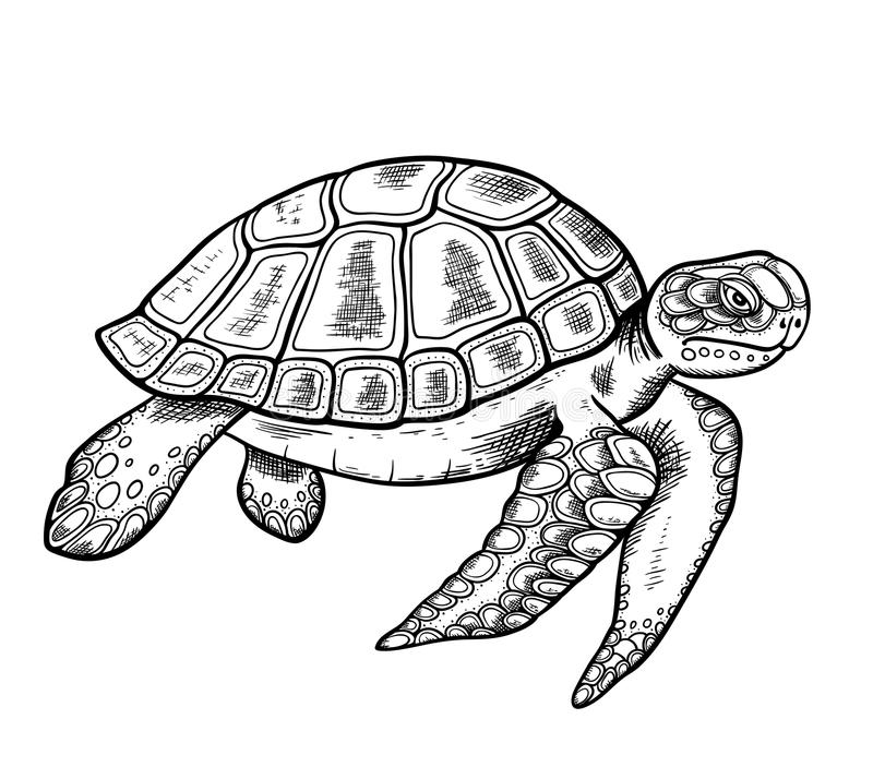 Hand drawn sea turtle. Vector hand drawn sea turtle on a white background vector illustration