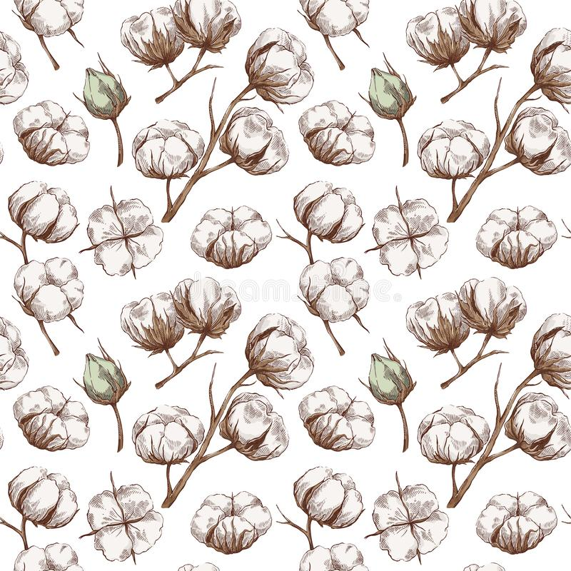 Seamless cotton pattern. Hand drawn seamless pattern with cotton branches in vintage style. Botanical eco illustration royalty free illustration