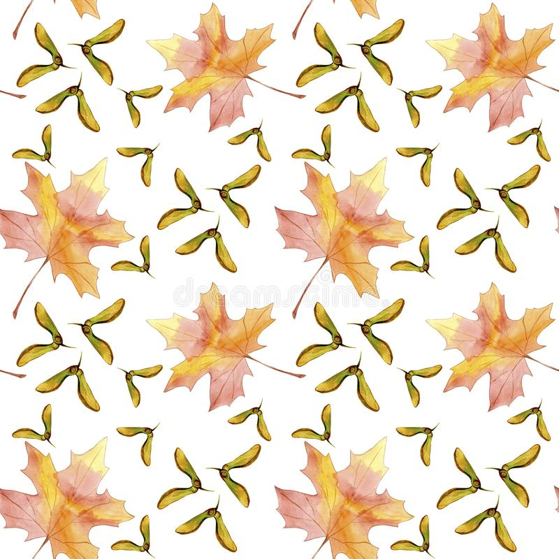Hand drawn seamless pattern watercolor colorful maple fall leaf and winged seeds maple tree isolated on white background. stock illustration