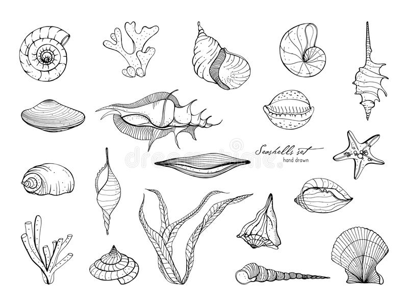 Hand drawn seashells collection. Set of seaweed, coral, starfish, shell. Vector black and white illustration. Hand drawn seashells collection. Set of seaweed stock illustration