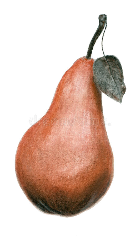 Hand drawn sepia pear illustration stock image