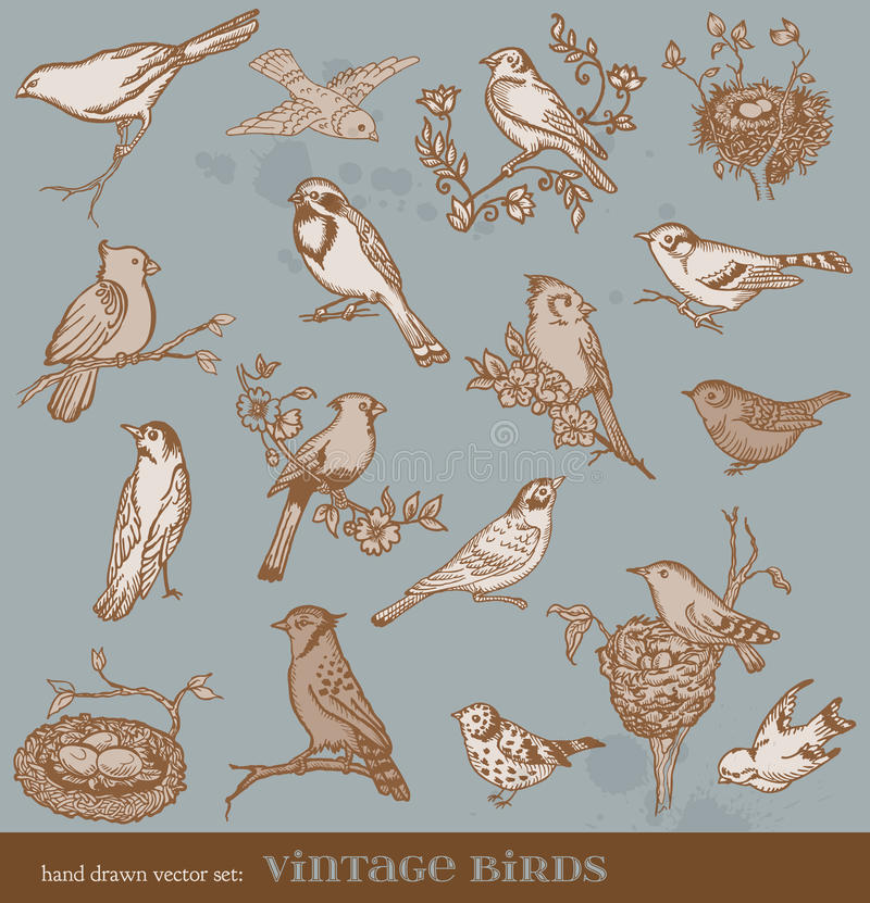 Hand drawn set: birds vector illustration